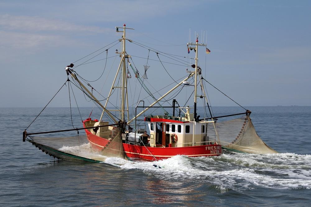auf Krabbenfang