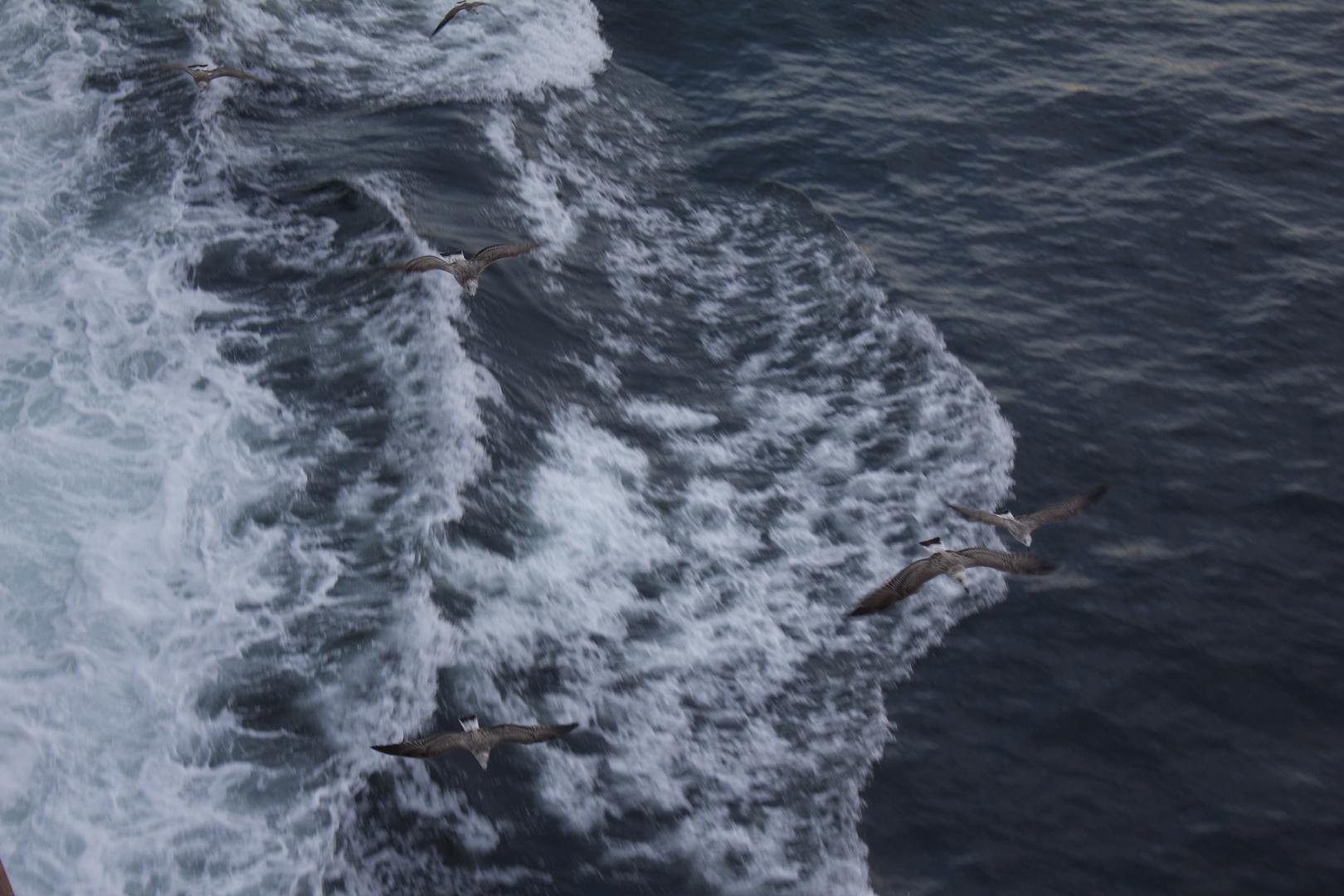 auf Meer unterwegs