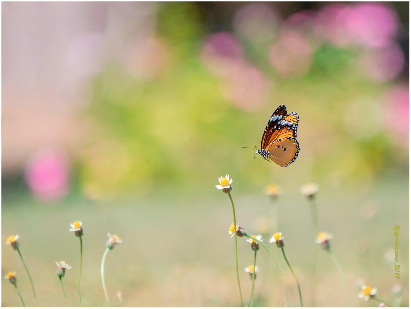 auf nektar suche.......