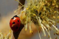 Auf Pollen-Jagd