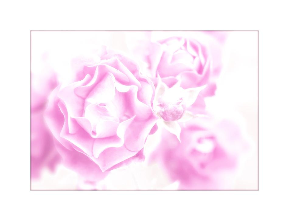 auf rosa wolken gehen ...