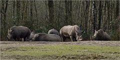 Auf Safari ...