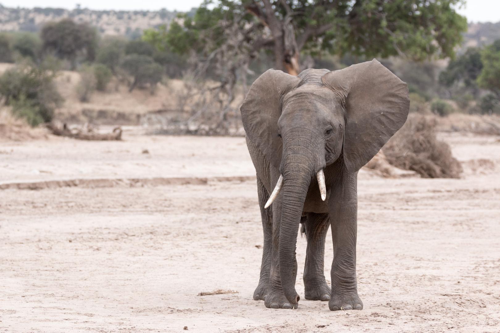 Auf Safari stets unter Beobachtung