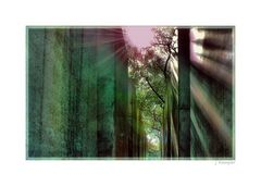 - auf Schatten folgt Licht -