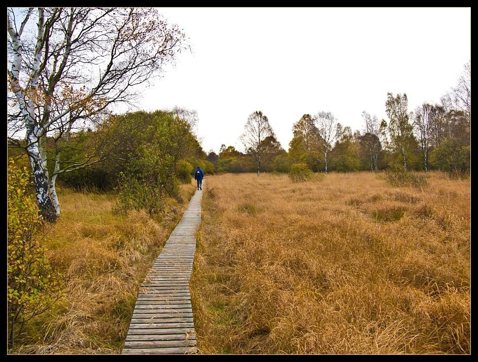 auf schmalen Holzstegen im Kutenhart