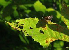 Auf Schmetterlingsuche