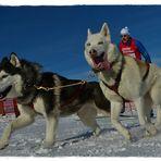Auf Skiern mit zwei Hunden