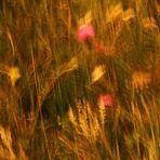 auf Sommerwiesen
