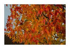 Auf Wiedersehen Herbst...