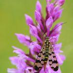 ...auf wilder Orchidee