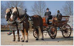 auf zum Pferdemarkt