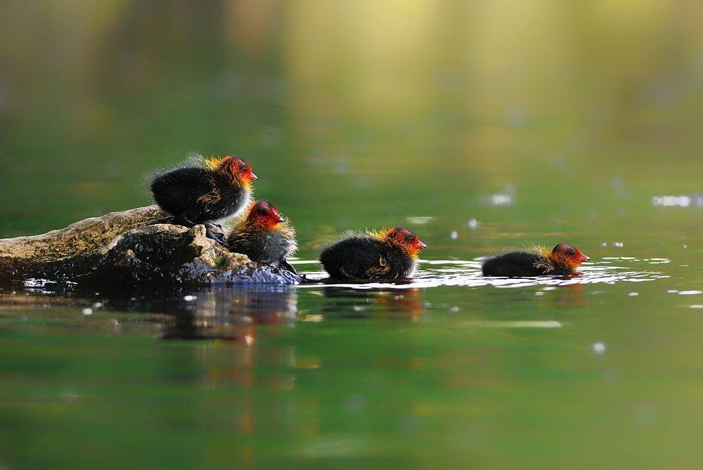 Auf zum Schwimmen...