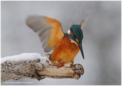 --- Auf zur Jagd, und wenn das Wetter noch so schlecht ist, Schneetreiben ---