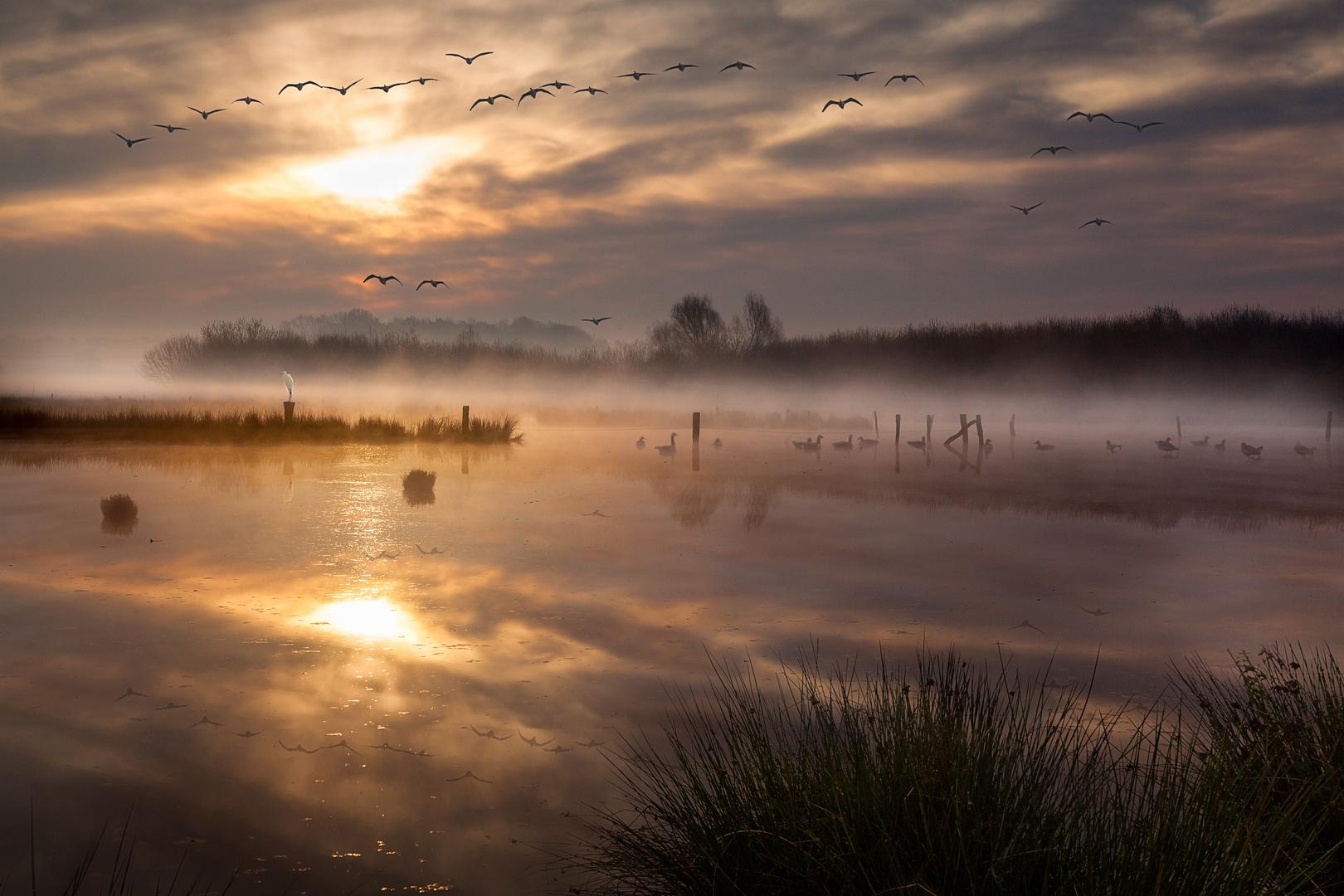 Aufbruch der Zugvögel