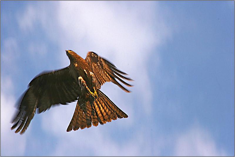 Auffliegen