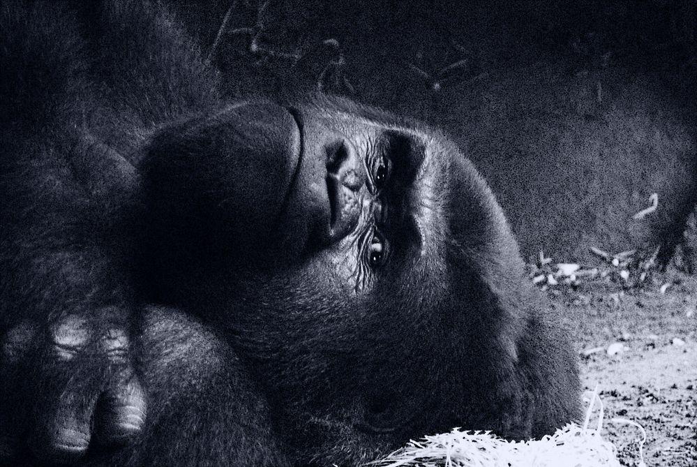 Aufgenommen Frankfurter Zoo