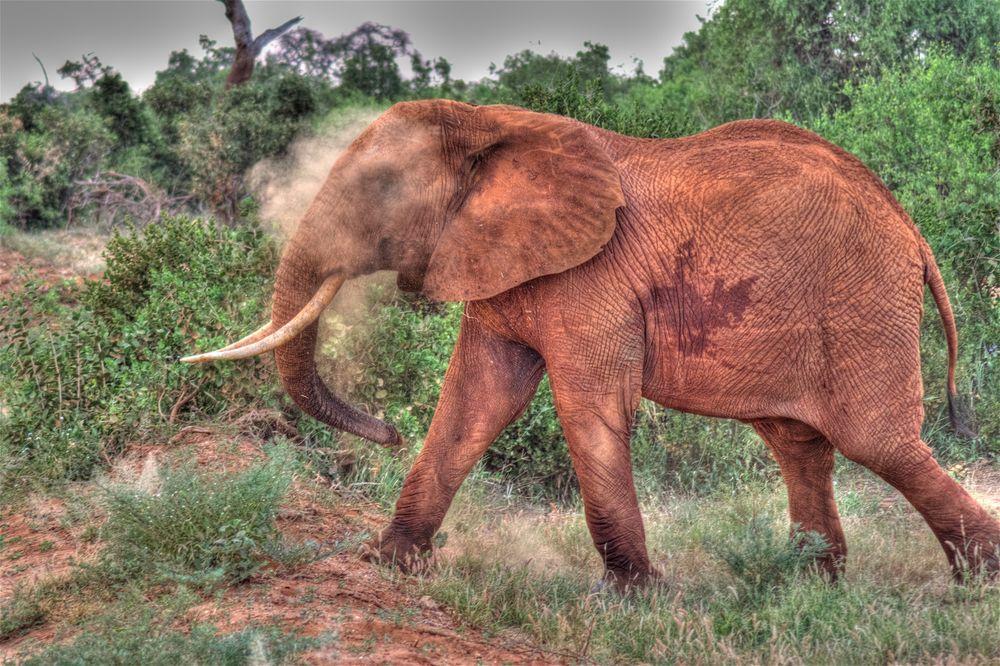 Aufgeregter Elefant