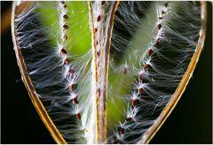 Auflösung :aus der Botanik