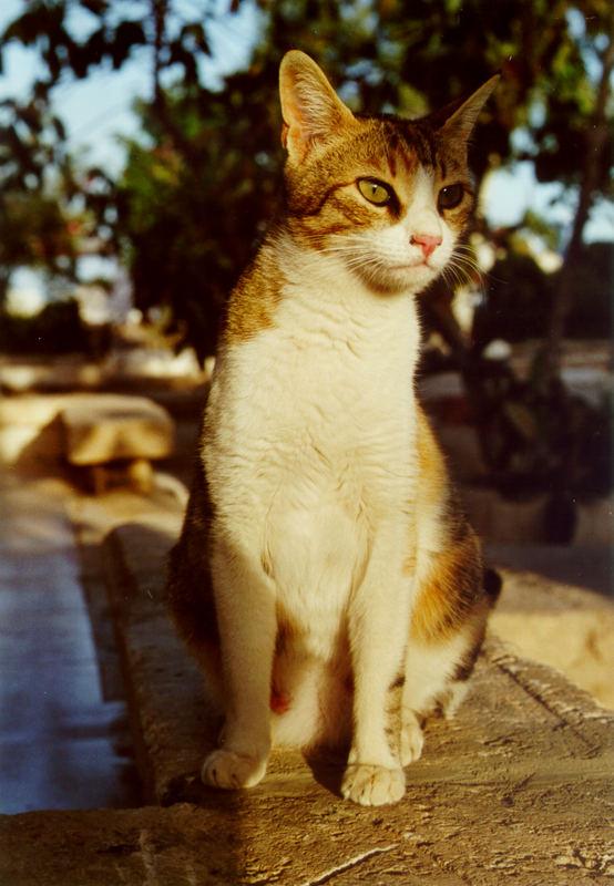 aufmerksame Katzenmutter