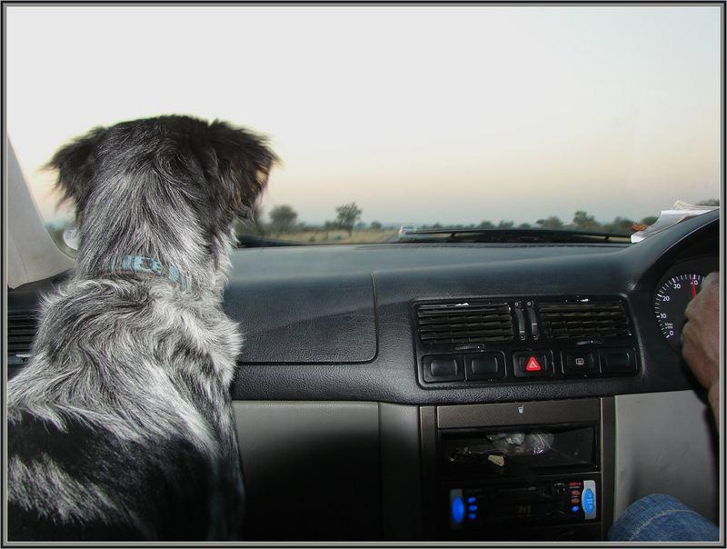 aufmerksamer Beifahrer