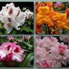 Aufnahmen aus dem Rhododendronpark in Westerstede-Linswege