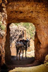 Aufpasser am Grand Canyon