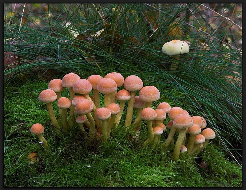 Aufräumen im Wald ?