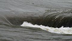 Aufruhr im Eider-Wasser