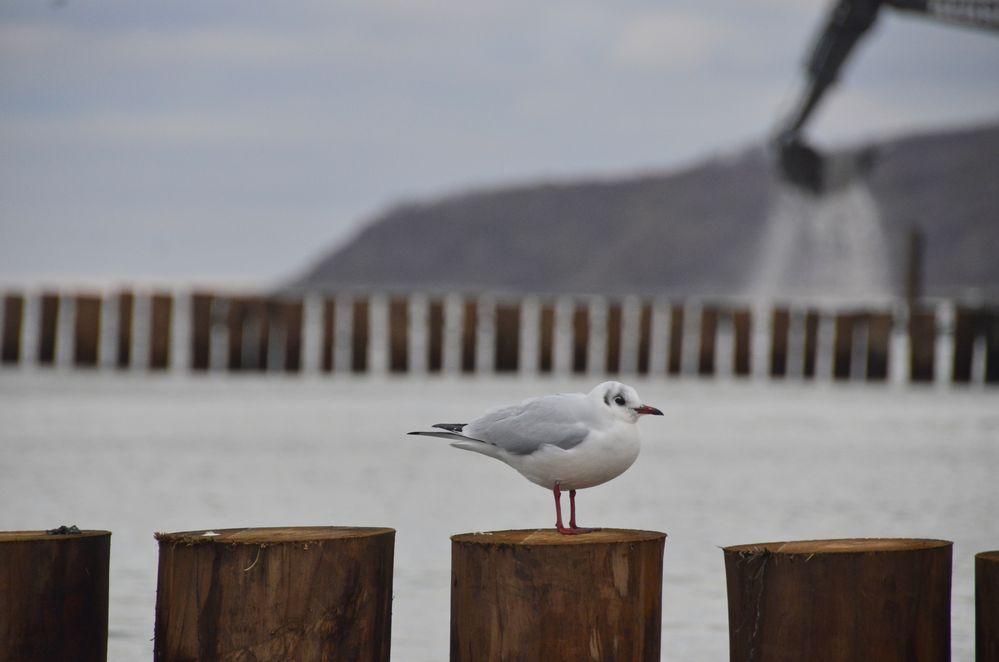 Aufsicht am Strand