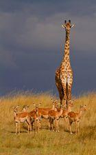 Aufsicht in der Wildnis