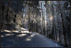 Aufstieg zum Eckbauer am 04.12.2010