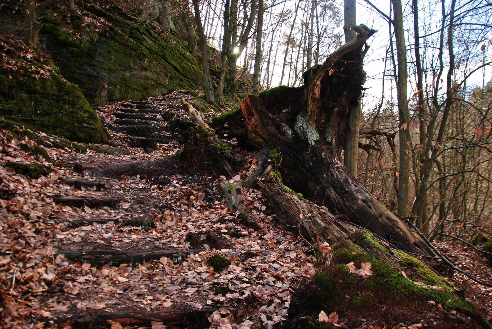 Aufstieg zum Königstein
