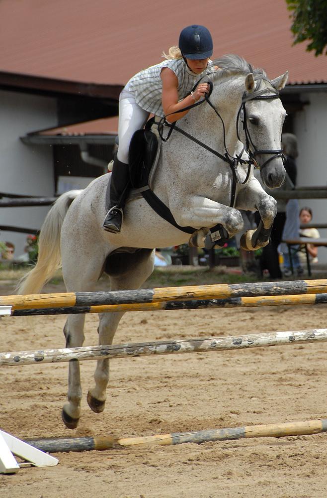 Aufwärmen für Pferd und Reiterin Foto & Bild | sport ...