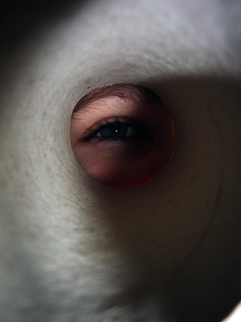 Auge des Orkans