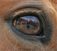 Auge im Auge