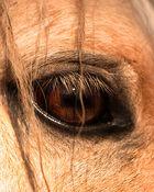 Auge im Detail oder der Spiegel der Seele