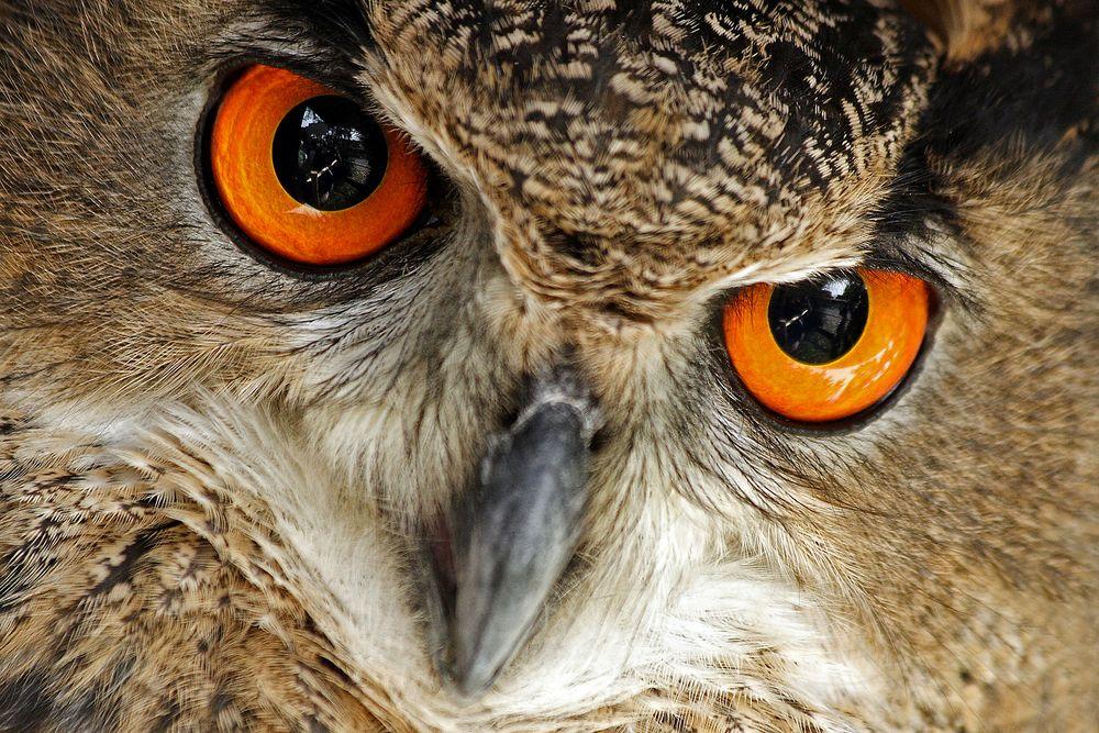 Auge in Auge...!