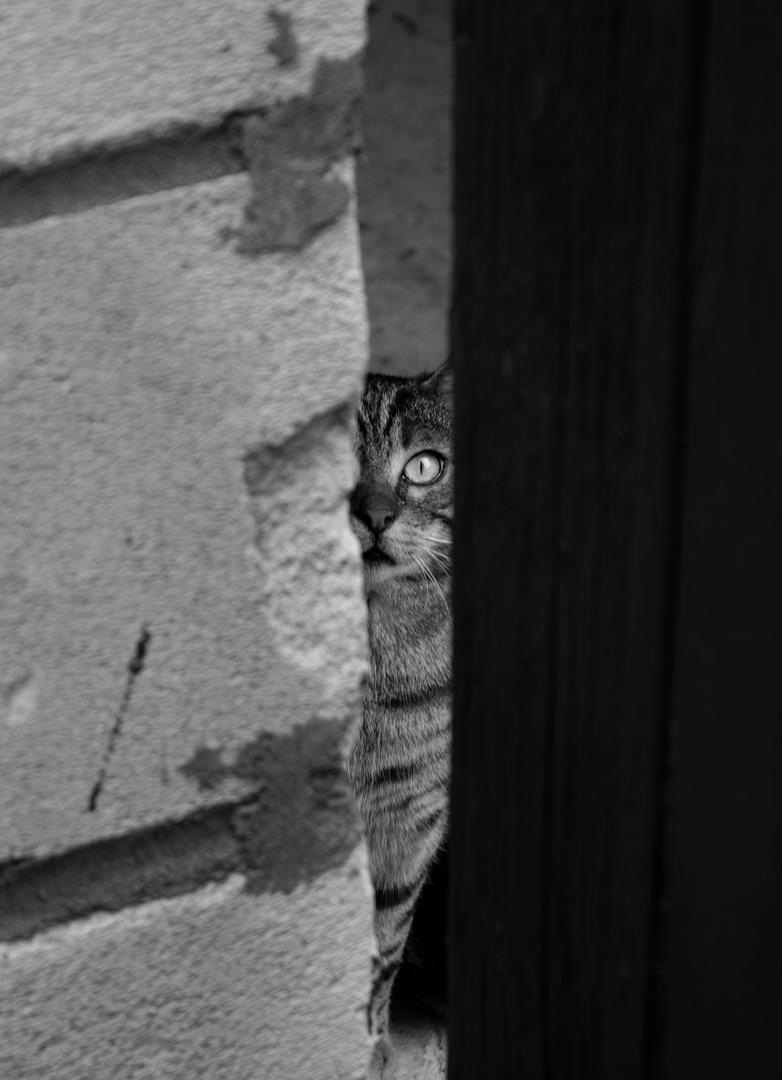 Auge in Auge.