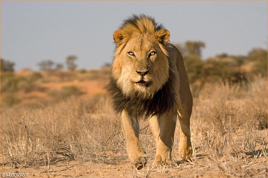 Auge in Auge mit dem König
