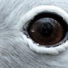 Auge in Auge mit einem Laufvogel