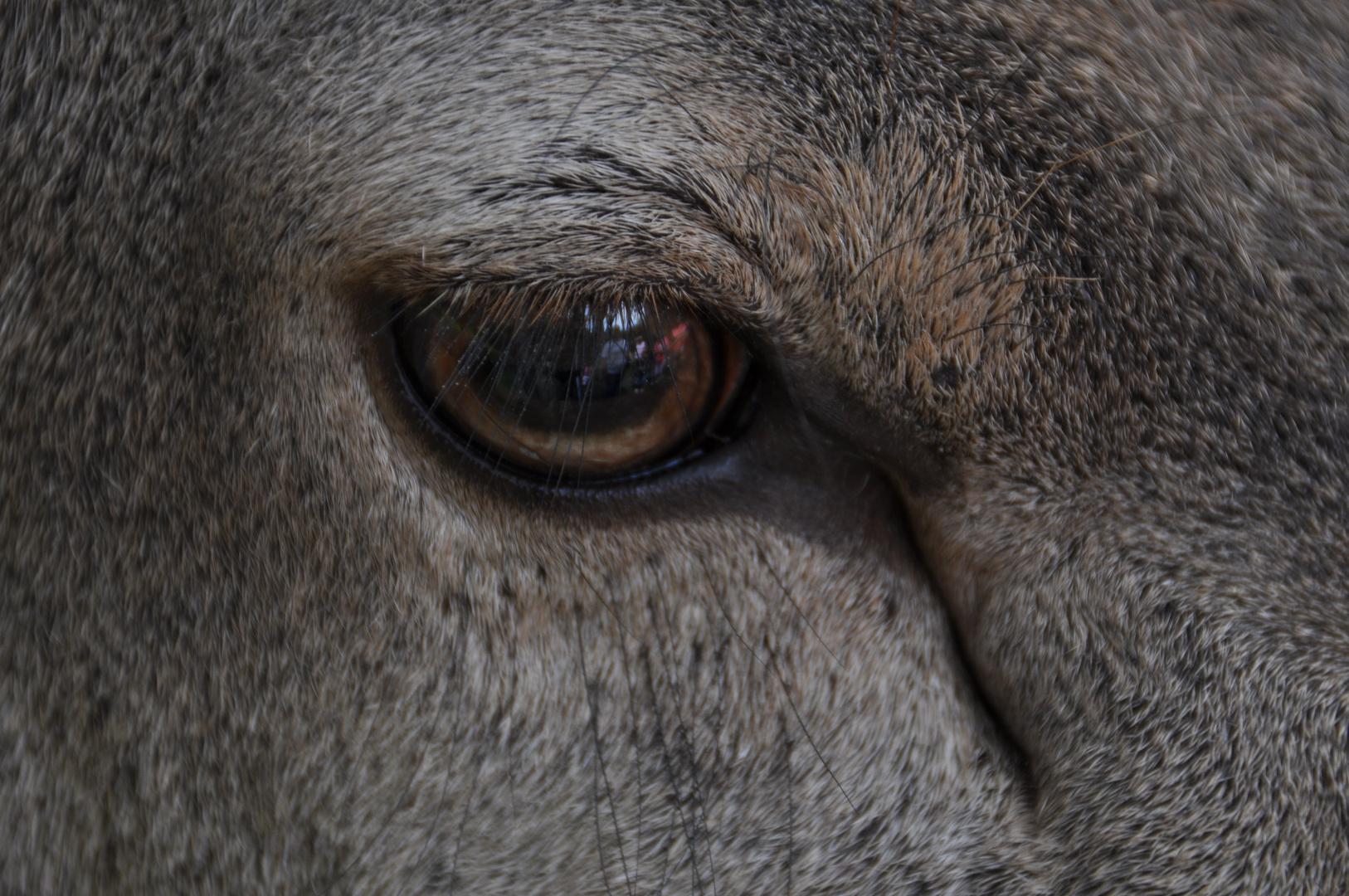 Auge um Auge, der Hirsch und Ich
