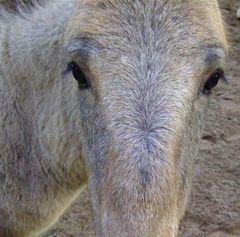 °°° Auge um Auge - Oder - Auf den Punkt gebracht - hat Flipsky den Pferdeblick eingefangen °°°