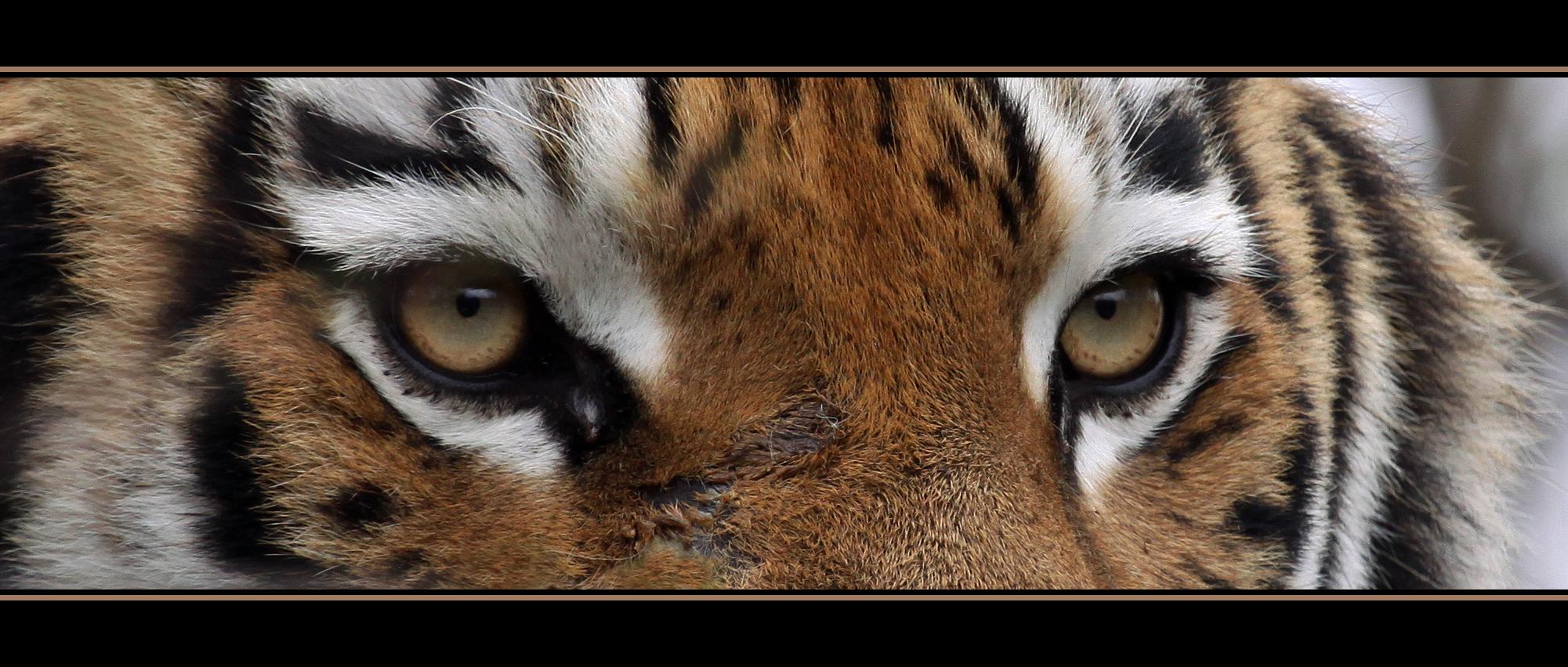 Augen..................