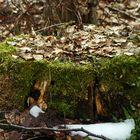 """""""Augen auf am Waldesrand - Am Baumstumpf"""""""