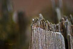 """""""Augen auf am Waldesrand - Baumstumpfkrone"""""""
