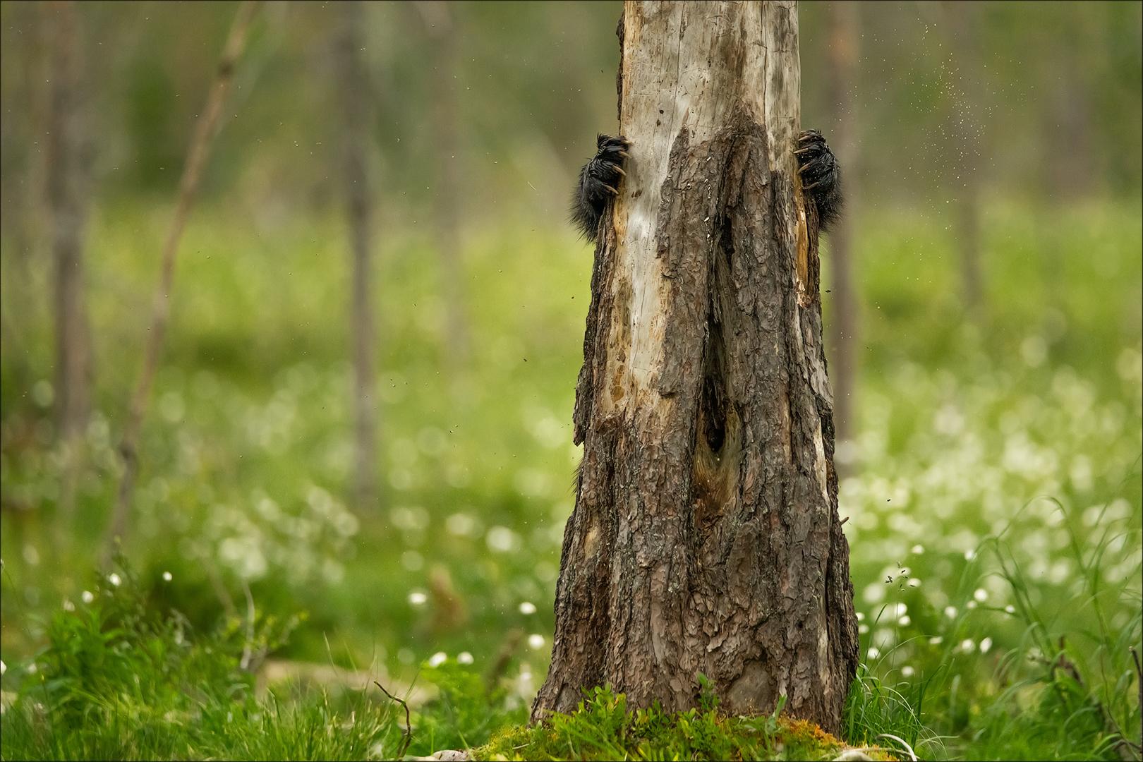 Augen auf im Wald!