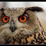 Augen * Blicke