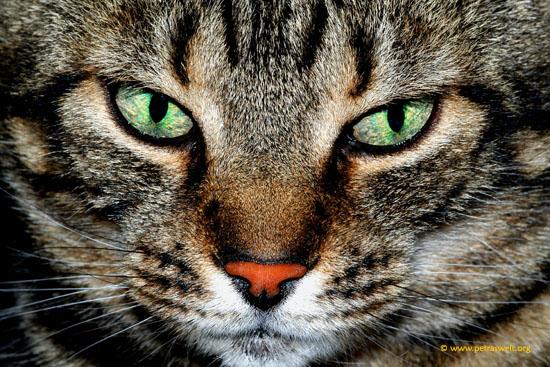 """Augen""-""Blicke"""
