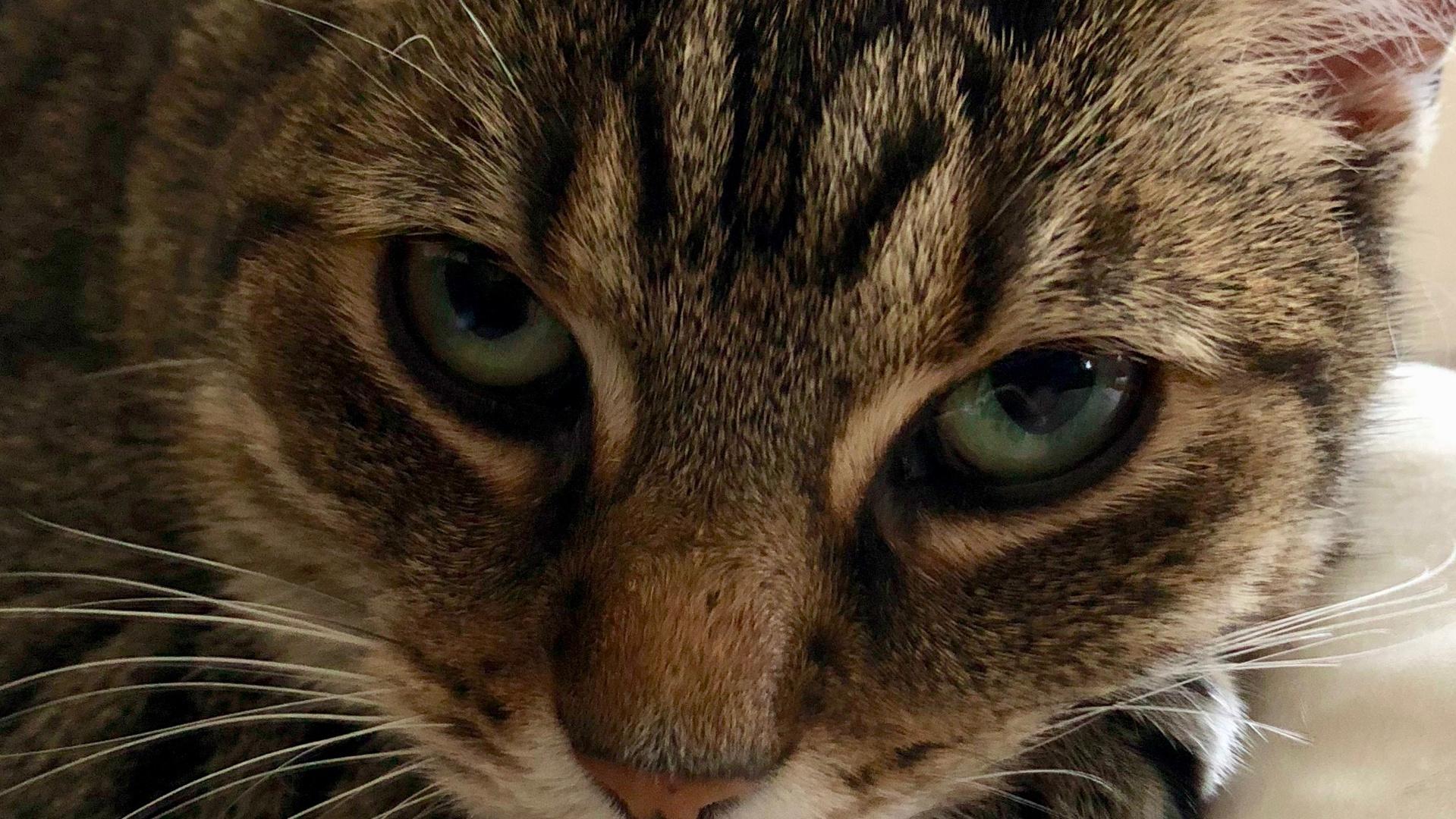 Augen Jamie