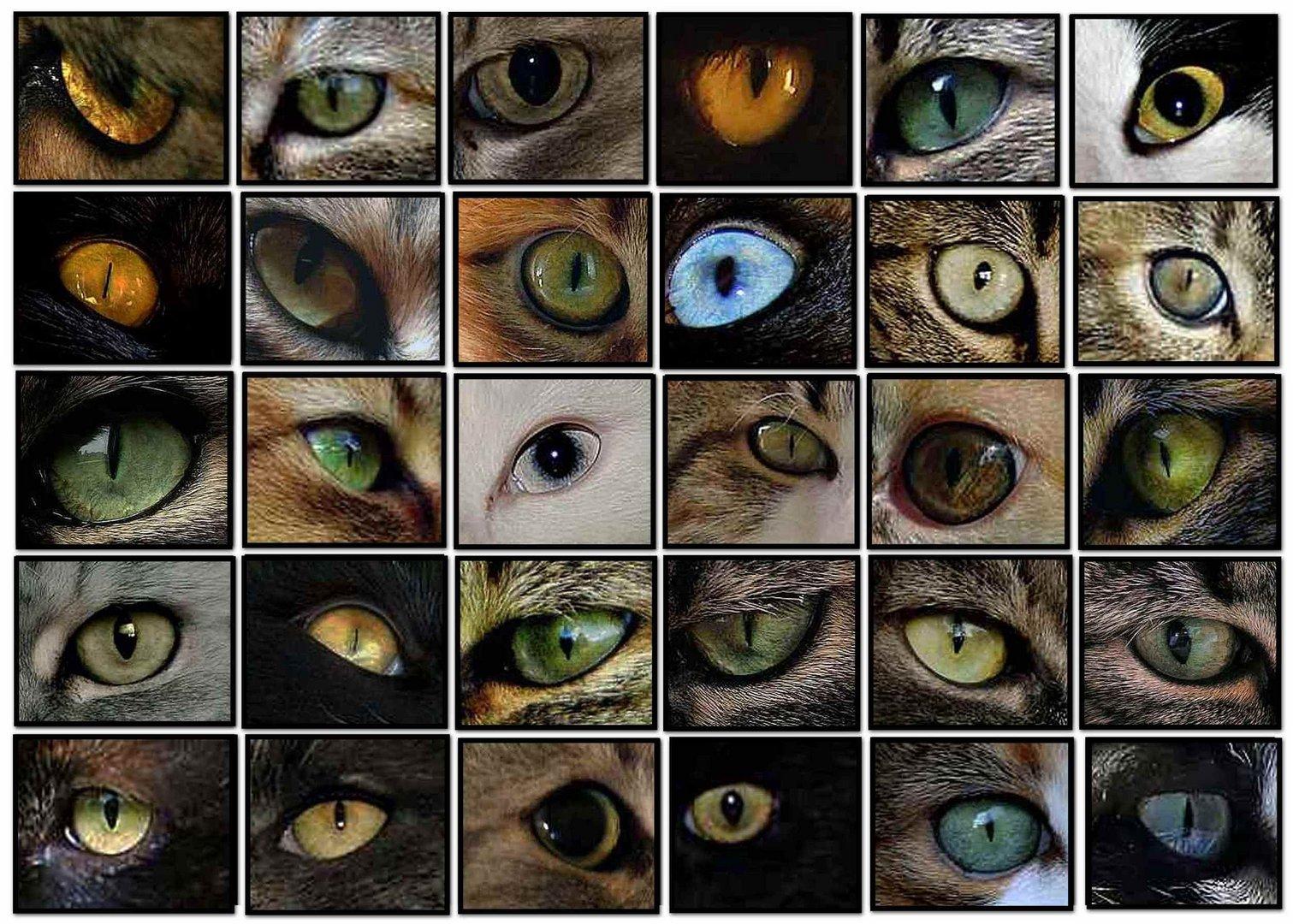 Augen Rätsel-2